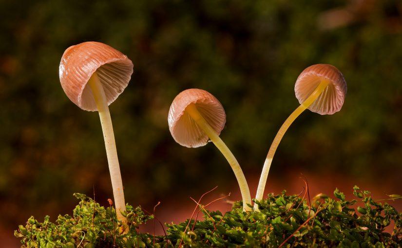 (731) Funghi