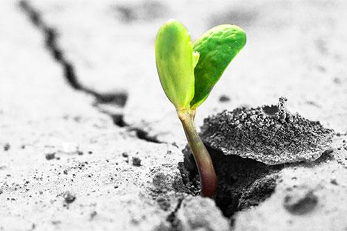 (146) Speranza
