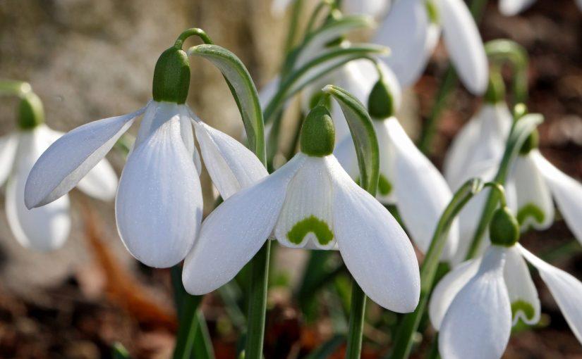(912) Primavera